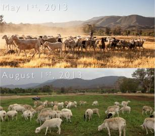 Primal Pastures 4